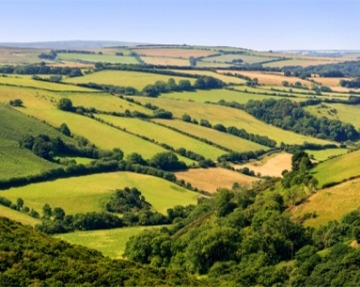 Green fields in Devon